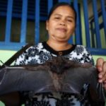 ◆インドネシアのコウモリ食。それくらいなら何とか食べられる?
