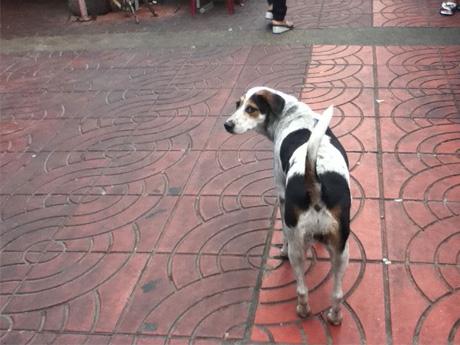 ◆タイでは、野良犬も素性の知れない旅行者も同じ扱いだった