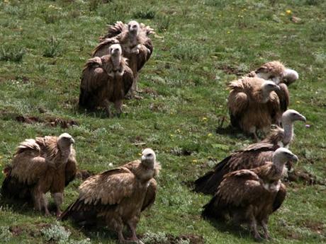 ◆鳥葬。遺体を鳥に食べさせて、死んだ人は鳥と共に天に昇る