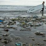 ◆海に捨てられたゴミはどこにいくのか。それはあなたの口の中である