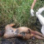 ◆タイは日本の28倍もレイプ事件が起きて、凶悪事件もすぐに忘れられる