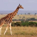 100万種の動植物が絶滅する。今後は人間も生きるのがつらい環境へ