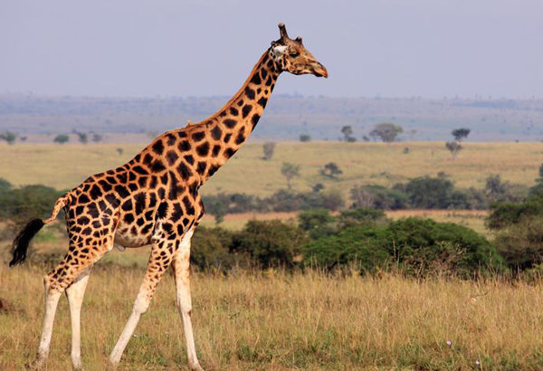 100万種の動植物が絶滅危機する。今後は人間も生きるのがつらい環境へ